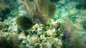 Wachluje Koral Obrazy Royalty Free