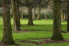 Wacholderbüsche im Wacholderbusch-Park Stockfotos