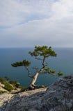 Wacholderbusch über dem Meer lizenzfreies stockbild
