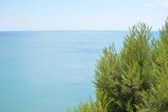 Wacholderbusch auf dem Hintergrund des Meeres und des Himmels lizenzfreie stockfotos