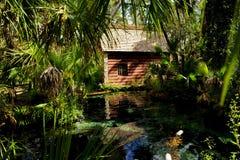 Wacholderbusch entspringt Florida Lizenzfreies Stockbild