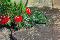 Wacholderbusch-Niederlassung und rote Pilze auf dem alten hölzernen Hintergrund Stockfotografie