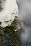 Wacholderbusch und Schnee Stockfotografie