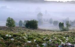 Wacholderbuschbäume und -blaubeeren im dichten Nebel lizenzfreies stockbild