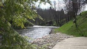 Wacholderbuschbaumast und flüssiges Flusswasser 4K stock video