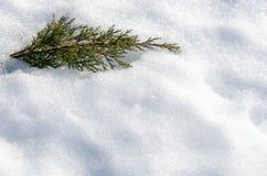 Wacholderbuschbusch im tiefen Schnee Eisiger Winter und sonniger Tag stockfotografie