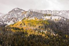Wachposten-Durchlauf-Ansicht von Fall-Blättern und Schnee in den Wasatch-Bergen Stockfoto