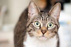 Wachsame junge Katze lizenzfreies stockfoto