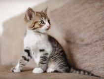 Wachsame Kätzchenkatze Lizenzfreies Stockbild
