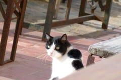 Wachsame Katze Stockbild