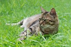 Wachsame Katze Stockfoto