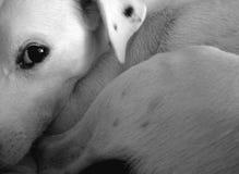 Wachsamer Hund stockfoto