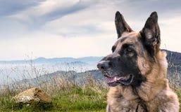 Wachsamer Schäferhund Dog Sitting draußen auf einem Hügel mit Ansicht anderer Berge stockfoto