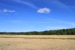 Wachsen auf blauen Himmeln Lizenzfreie Stockfotografie