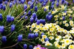 Wachsen der blauen und weißen Blumen nahe dem Wasser stockfotografie