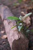 Wachsen des kleinen Baums Stockbild