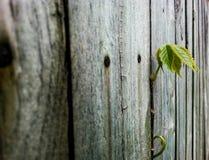 Wachsen durch Zaun Lizenzfreie Stockbilder