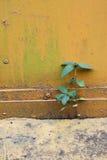 Wachsen kleines palnt zwei auf Abstand des Klebers Stockfoto