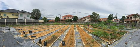 Wachsen Sie oder halten Sie unseren eigenen Biogarten mit Kräutern, Gemüse u. Früchten im Hausmittel instand Stockfoto