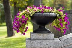 Wachsen vieler schönes Blumen und Blühen in einem großen Steintopf im Park am sonnigen Tag des Sommers Hintergrund des grünen Gra Stockbilder