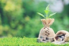 Wachsende Anlage auf Geldtasche mit Stapel Münzengeld auf natürlichem stockfotos