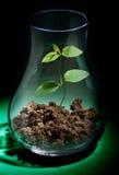 Wachsende Anlage in einem Reagenzglas Stockbilder