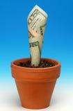 Wachsende Anlagegüter Lizenzfreies Stockbild
