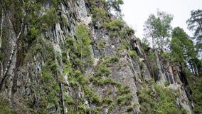 Wachsende Bäume auf einer Klippe Lizenzfreie Stockfotografie