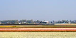 Wachsende Fühler auf den Feldern im Frühjahr Stockbild