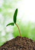 Wachsende Grünpflanze stockbilder