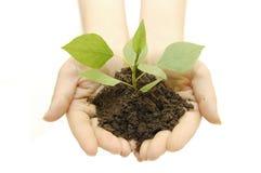 Wachsende Grünpflanze in einer Hand Stockbild