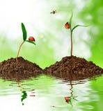 Wachsende Grünpflanze mit Marienkäfer stockfotos
