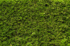 Wachsende Grasoberflächenbeschaffenheit stockbilder