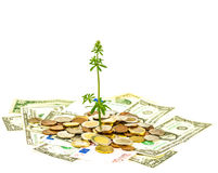 Wachsende Investition Lizenzfreie Stockbilder