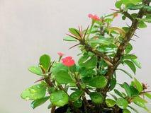 Wachsende kleine Blumenanlage mit Regentropfen Stockfotos