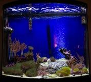 Wachsende Koralle im Aquarium Lizenzfreie Stockbilder