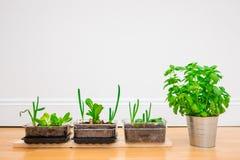 Wachsende Kräuter und Gemüse zu Hause Lizenzfreie Stockfotos