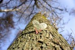 Wachsende Liebe Stockbild