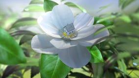 Wachsende Magnolienblumen-Zeitspanne mit Haus stock video footage