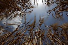 Wachsende Nahrung der Weizenfeld-Landwirtschaftsnatur-Wiese Stockfotografie