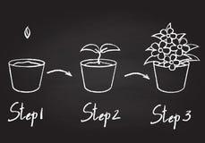 Wachsende Phasen der Topfpflanze lizenzfreie abbildung