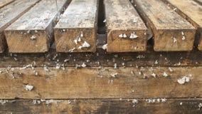 Wachsende Pilze auf Holz Stockbilder