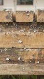 Wachsende Pilze auf Holz Stockfotografie