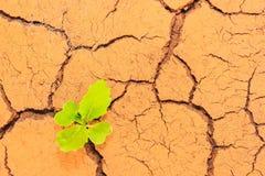 Wachsende Sprünge des trockenen Bodens der Abflussrinne des Sämlings stockbild