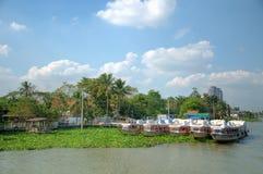 Wachsende Wasserpflanzeblockdämme Lizenzfreies Stockbild