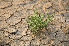 Wachsender Abflussrinneboden der Grünpflanze Lizenzfreie Stockfotografie