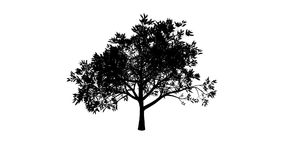 Growing Tree (Alpha Version) Stock Footage