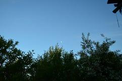 Wachsender Mond auf dem Hintergrund von kleinen Dickichten von blühenden Sträuchen lizenzfreies stockfoto