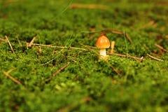 Wachsender Pilz Stockbild