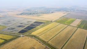 Wachsender Reis auf überschwemmten Feldern Reifer Reis auf dem Gebiet, der Anfang des Erntens Eine Panoramasicht Lizenzfreie Stockfotos
